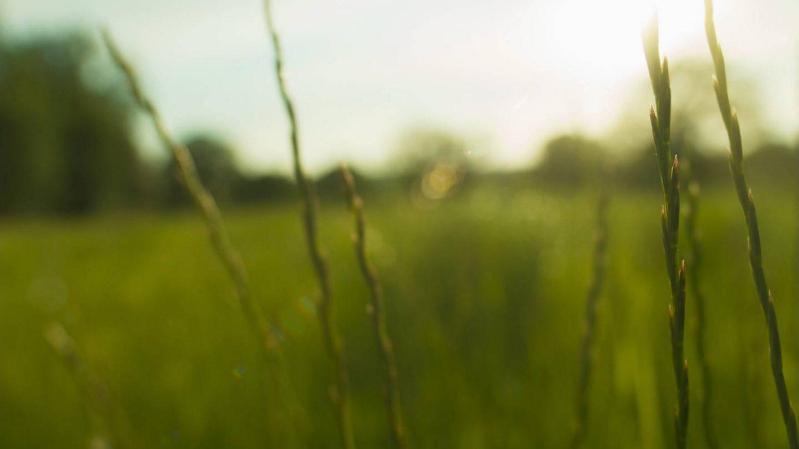 Still from film shot in British fields